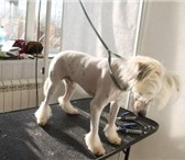 Изображение в Домашние животные Стрижка собак Стрижка кошек, собак, необходима, прежде в Клин 800