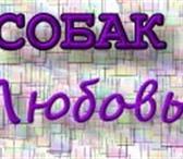 Изображение в Домашние животные Стрижка собак Опытный грумер предлагает стрижку собак и в Лыткарино 1000