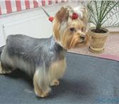 Фото в Домашние животные Стрижка собак Декоративные собаки - стрижкиКомплекс-уход*Все в Калуге 700