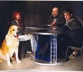 Foto в Домашние животные Услуги для животных Ветеринарная клиника  ВОСТОК  расположена в Москве 100