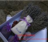 Изображение в Домашние животные Растения С давних пор известно, что аромат лаванды в Екатеринбурге 2000