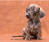Изображение в Домашние животные Услуги для животных Предлагаю профессиональную помощь в выборе в Москве 1500