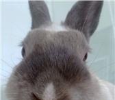 Foto в Домашние животные Услуги для животных Обеспечу уход за Вашим животным во время в Кемерово 0