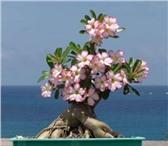 Изображение в Домашние животные Растения Семена экзотических растений с пересылкой в Астрахани 50