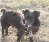 Фотография в Домашние животные Отдам даром ЖуликВзрослый воспитанный мальчишка(3-4 года). в Челябинске 300