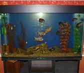 Foto в Домашние животные Рыбки Изготовление аквариумов,  крышек по вашим в Белорецке 0