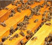 Фотография в Домашние животные Другие животные Продажа пчелопакетов карпатской породы. Пчёл в Тюмени 4000