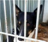 Фото в Домашние животные Отдам даром Веня- его история начиналась очень печально. в Челябинске 100