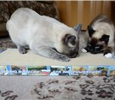 Foto в Домашние животные Товары для животных Хочу порадовать кошек города Тверь и обл. в Твери 300