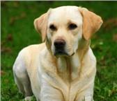 Foto в Домашние животные Услуги для животных Предлагаю свои услуги по выгулу собак.  1. в Москве 300