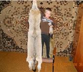 Изображение в Хобби и увлечения Охота Кавказский подвид. Размер от кончика носа в Ставрополе 10000