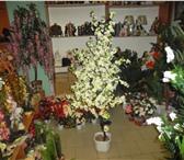 Фото в Домашние животные Растения продаётся иск.дерево сакуры(собств.производство) в Москве 1850