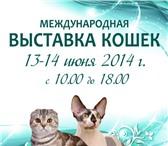 """Изображение в Домашние животные Выставки кошек Дорогие Друзья ! КЛК """"Топ Лайн"""" приглашает в Саратове 200"""