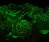 Foto в Домашние животные Растения Мы предоставляем Вам возможность преобрести в Самаре 250