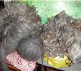 Фотография в Хобби и увлечения Разное Продаю козий пух придонской породы нерасчесанный в Перми 1600
