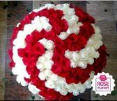 Foto в Домашние животные Растения Акция! Розы по Самой низкой ценеРоза Голландия, в Перми 68