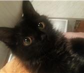 Foto в Домашние животные Вязка Черная - причерная, волшебная кошка, ищет в Улан-Удэ 0