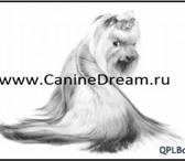Изображение в Домашние животные Стрижка собак Любые профессиональные стрижки собак и кошек в Санкт-Петербурге 0