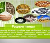 Foto в Образование Школы Предлагаю услуги по написанию проектов и в Красноярске 500