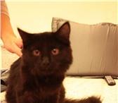 Foto в Домашние животные Найденные Найден кот в районе Красной площади,  видимо в Красноярске 0