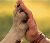 Фото в Домашние животные Услуги для животных Коррекция поведения собак. в Красноярске 1700