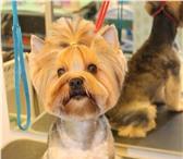 Изображение в Домашние животные Стрижка собак Стрижка собак и кошек всех пород. Грумминг в Рязани 800