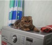 Изображение в Домашние животные Вязка Молодая, ласковая, воспитанная кошечка породы в Москве 0