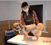 Фотография в Домашние животные Услуги для животных Профессиональный салонный груминг, возможен в Таганроге 500