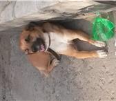 Foto в Help! Свидетели, Очевидцы На вокзале в г.Волжский лежит собака.предположительно в Волжском 0