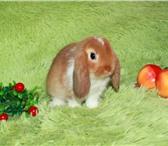 Фотография в Домашние животные Грызуны Питомник декоративных кроликов «Пушистое в Москве 5000