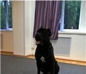 Фото в Домашние животные Услуги для животных Вниманию владельцев собак и кошек! Представляем в Екатеринбурге 0
