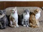 Ищем Друзей для котят с яркой индивидуальностью 4799979 Другая порода фото в Иркутске