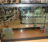 Фотография в Домашние животные Товары для животных Аквариум малый - длина 32 см ширина 12 см в Орле 500