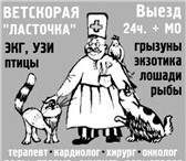 Foto в Домашние животные Услуги для животных ВЕТРИТУАЛ:ГУМАННОЕ   УСЫПЛЕНИЕ.КРЕМАЦИЯ.У в Москве 1500
