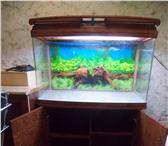 Foto в Домашние животные Рыбки Аквариум JEBO NEW R-390: - крышка аквариума в Пензе 10000