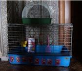 Foto в Домашние животные Товары для животных В дар 2 клетки для кролика, большая и маленькая, в Самаре 10