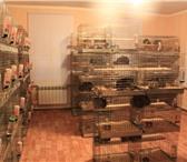 Foto в Домашние животные Грызуны Для организации бизнеса подходит как квартира, в Набережных Челнах 14000