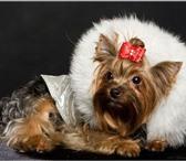 Фотография в Домашние животные Услуги для животных Компания URBAN DOGS предлагает уникальную в Москве 400