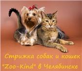 """Фотография в Домашние животные Стрижка собак Мастера """"Zoo-Kind"""" осуществляют в Челябинске 600"""