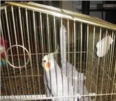 Фотография в Домашние животные Птички Продам замечательного пернатого друга – попугая в Таганроге 2300