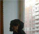 Изображение в Домашние животные Вязка собак Предлагаю для вязки кобелька 6 лет. Парода в Омске 0