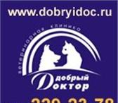 Изображение в Домашние животные Услуги для животных Осуществляем профилактику и лечение домашних в Казани 777