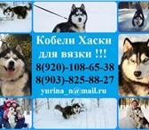 Изображение в Домашние животные Вязка собак Выращены и воспитаны опытным заводчиком! в Ростове-на-Дону 0