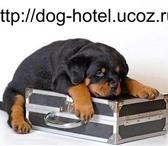Foto в Домашние животные Услуги для животных Гостиница для собакОсновная наша задача – в Челябинске 250