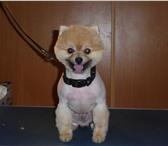 Фотография в Домашние животные Услуги для животных стрижка собак, котов и кошек всех пород. в Москве 850