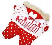 Foto в Домашние животные Одежда для собак Практичные и теплые комбинезоны. Спинка украшена в Тамбове 900
