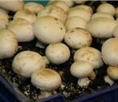 Изображение в Домашние животные Растения Вам нравится ходить в лес по грибы? А Вы в Ярославле 2100