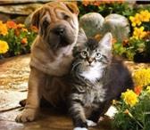 Фотография в Домашние животные Услуги для животных Санкт-Петербург, все районы, соседние города. в Санкт-Петербурге 0