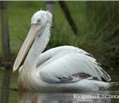 Фотография в Домашние животные Птички Реализация птиц разного возраста для Ручных в Санкт-Петербурге 0