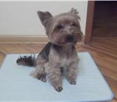 Изображение в Домашние животные Товары для животных Предлагаем многоразовые пелёнки для животных. в Калуге 500